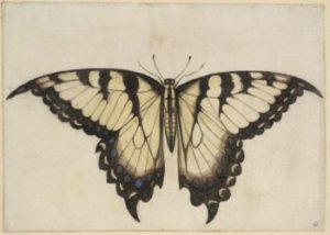 early american swallowtail painting