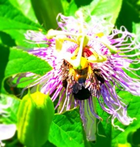 bee pollinate wildflower